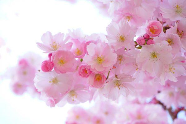 Comment conserver vos fleurs